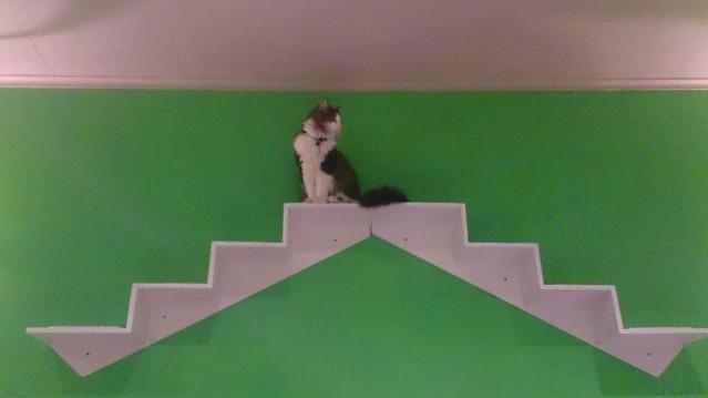 bar à chats bruxelles