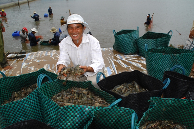farming-shrimp_asc-farm-workers_2